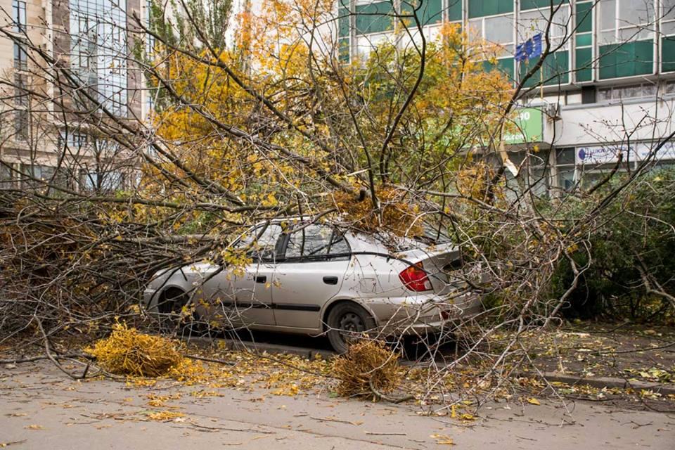 Оборвав провода, дерево рухнуло на автомобиль
