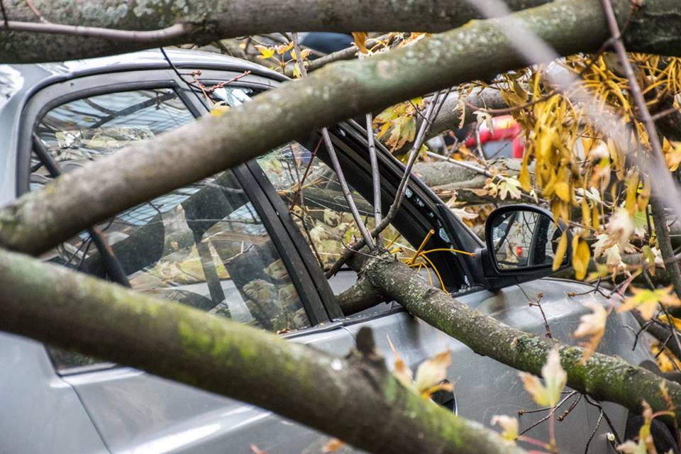 Ветки разбили стекло автомобиля