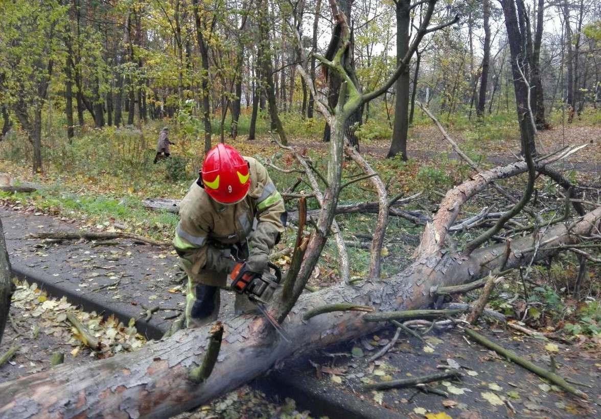 Спасатели освобождали дорогу от упавшего дерева при помощи бензопилы