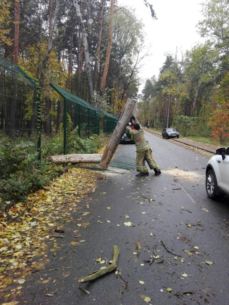 На Святошино дерево разрушило забо