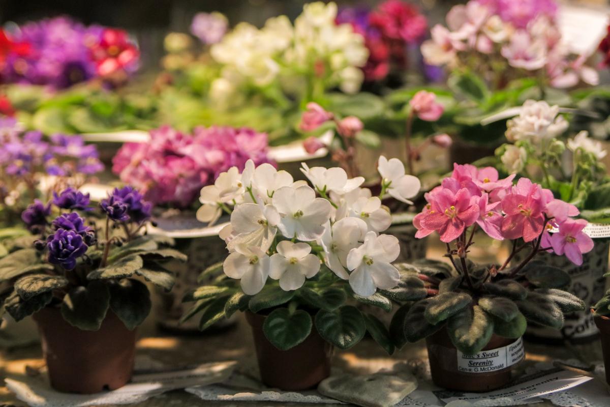 Понравившиеся цветы можно купить вместе с вазонами