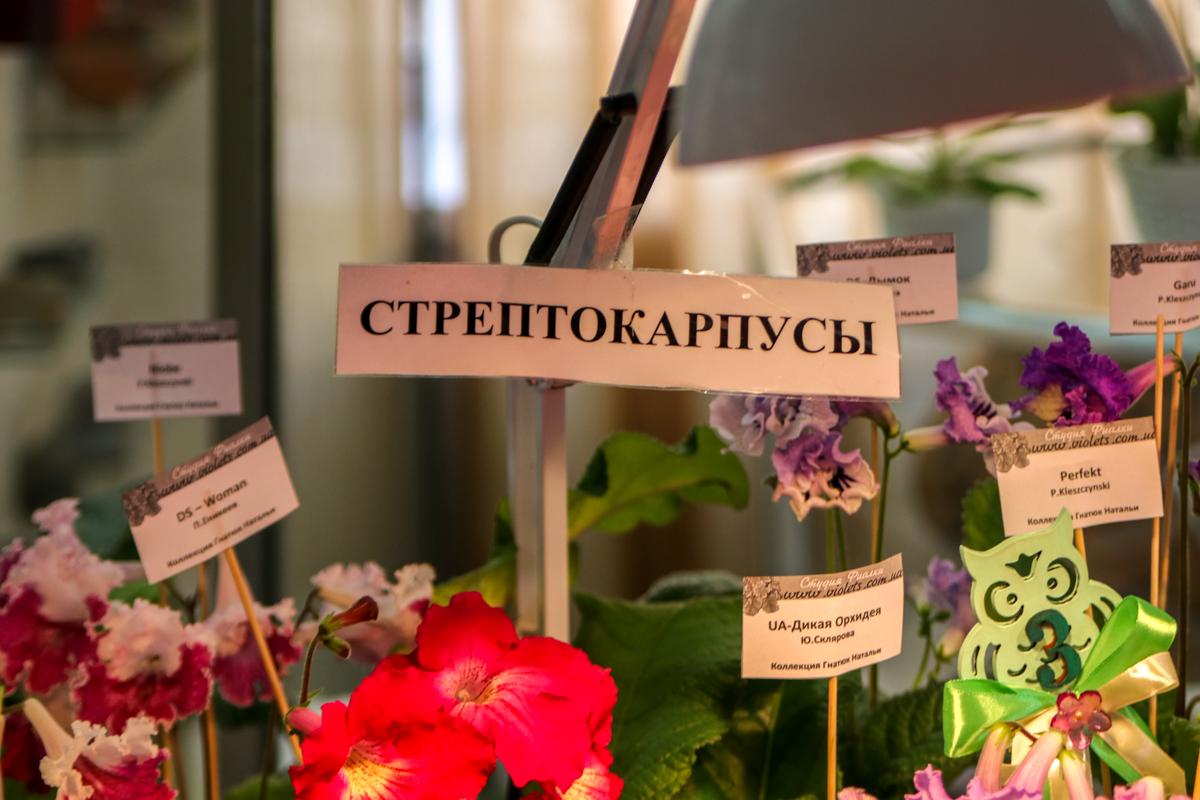 На выставке представлены сотни видов комнатных расстений