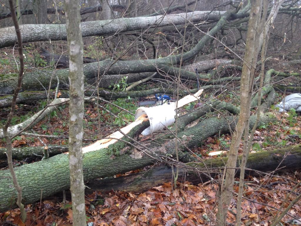 Из-за сильного ветра дерево упало на женщину-грибника