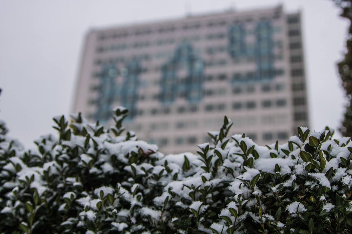 Пушистые снежинки на зеленых листьях