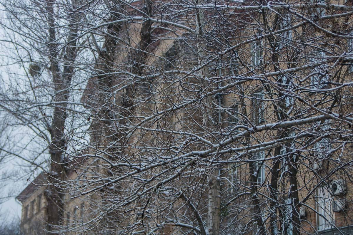 Белые деревья создают сказочную атмосферу в городе