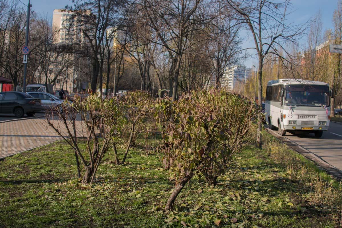 Также бабушки-эксперты одобрили обрезание. То, которое у деревьев. У растений исчезли старые ветки