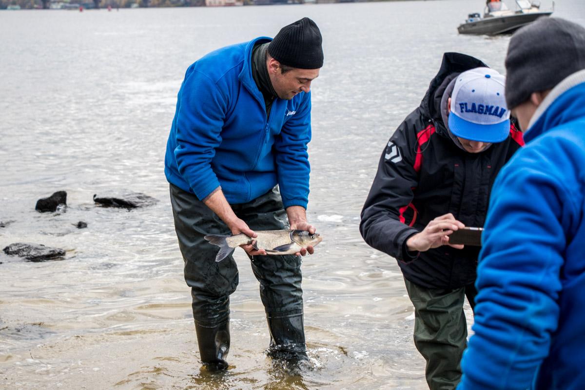 В Днепр выпустили более 4 тонн рыбы