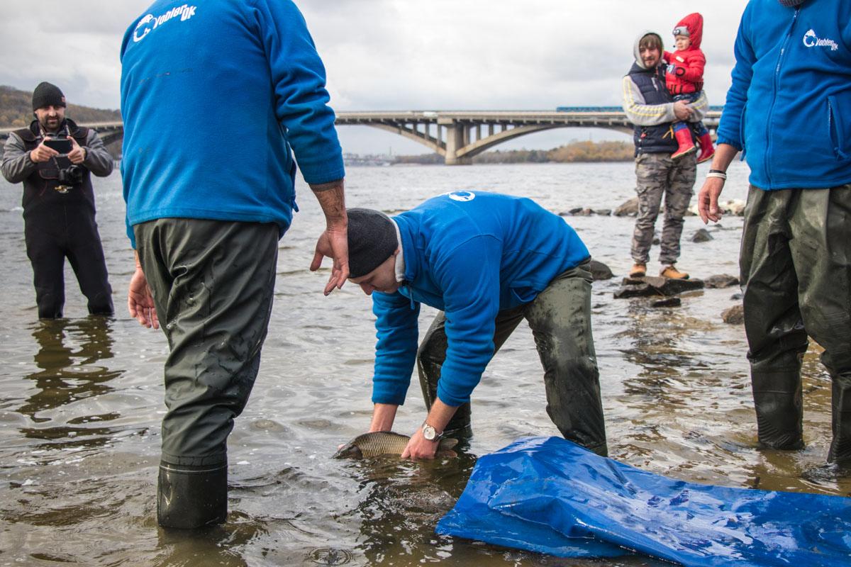 В реку выпустили поколение растительноядных рыб