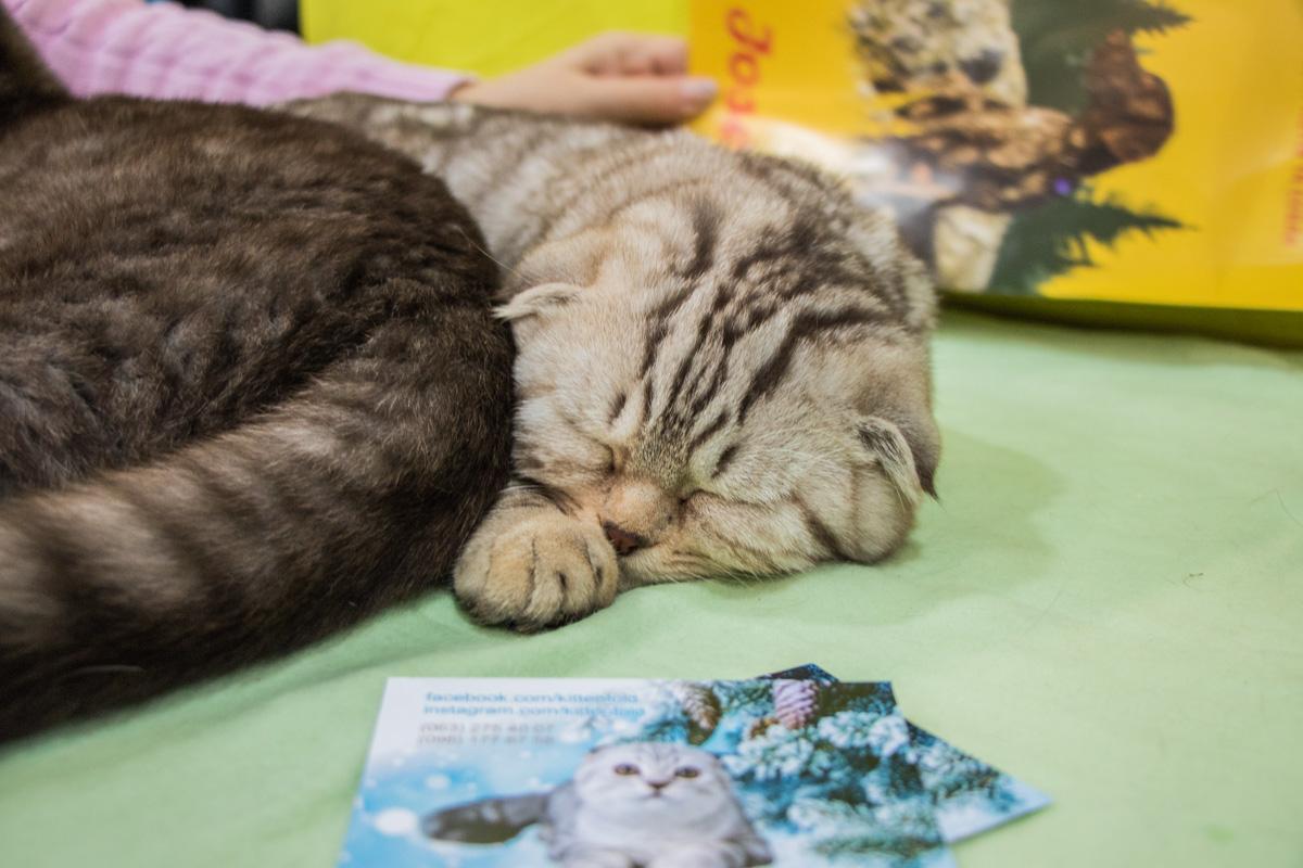 А этот котик просто устал от метушни вокруг
