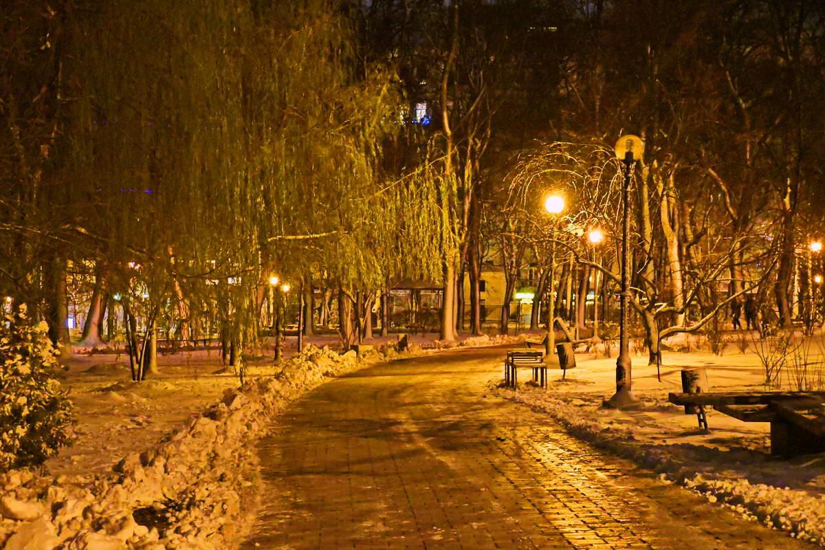 Ива противится приходу зимы - дерево совсем зеленое