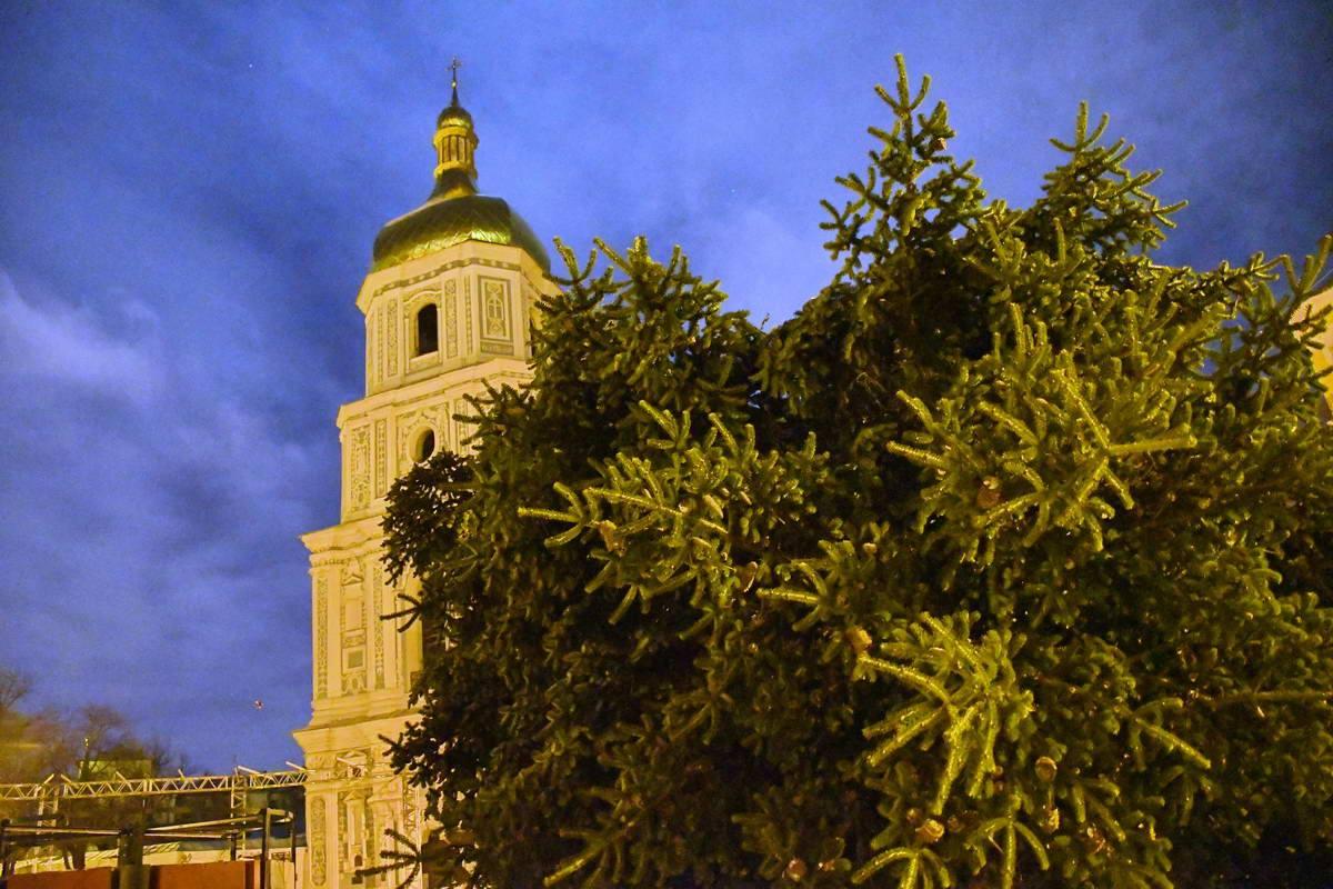 Зеленая красавица находится на Софийской площади