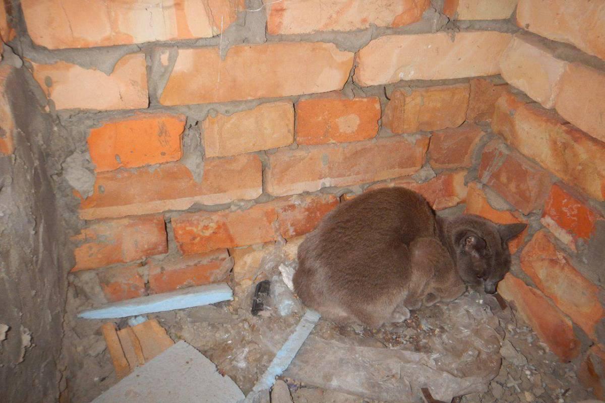 Кошка пока в шоке, но вскоре вернется в обычное состояние