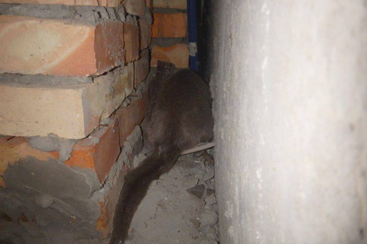Испуганное животное прячется в углу щели