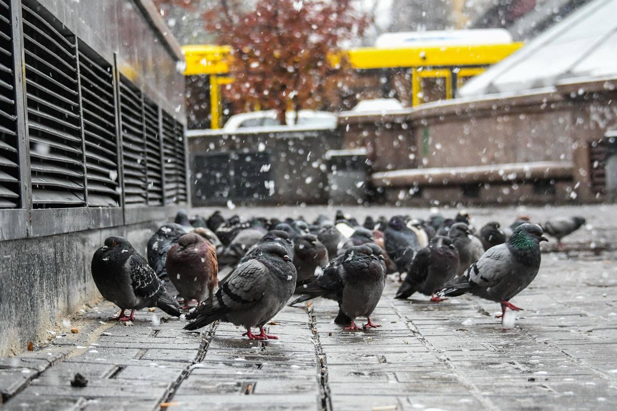 """""""Вместе теплее и веселее"""", - сообщили Информатору голуби"""