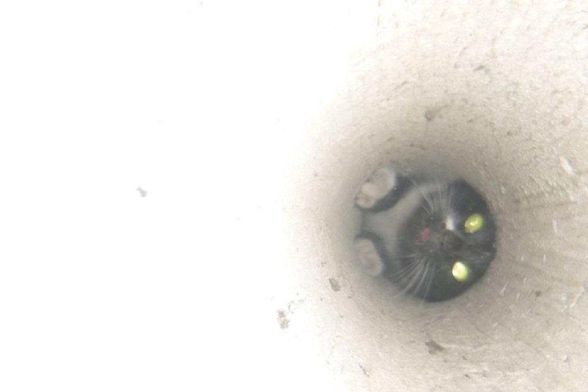 В Киеве кошка застряла в вентиляционной шахте