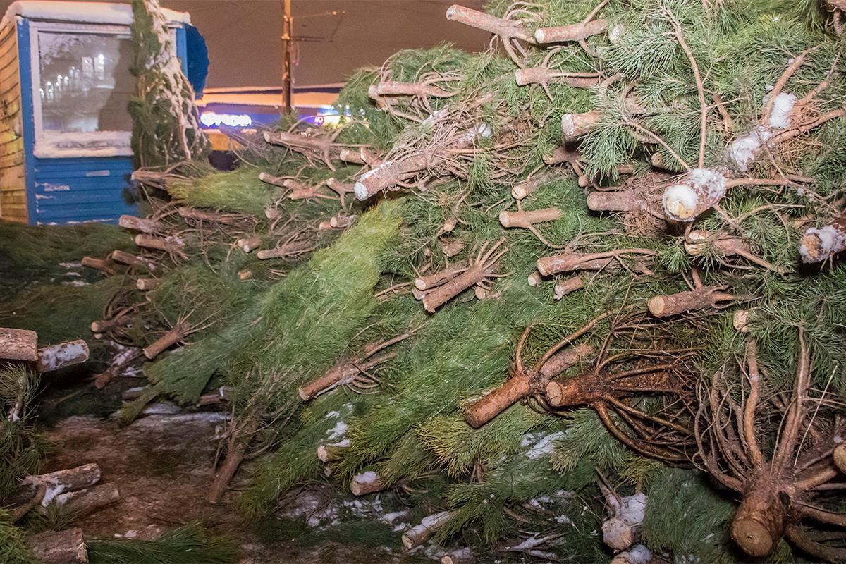 Оказалось, что в Киеве найти легальное новогоднее деревце не так просто