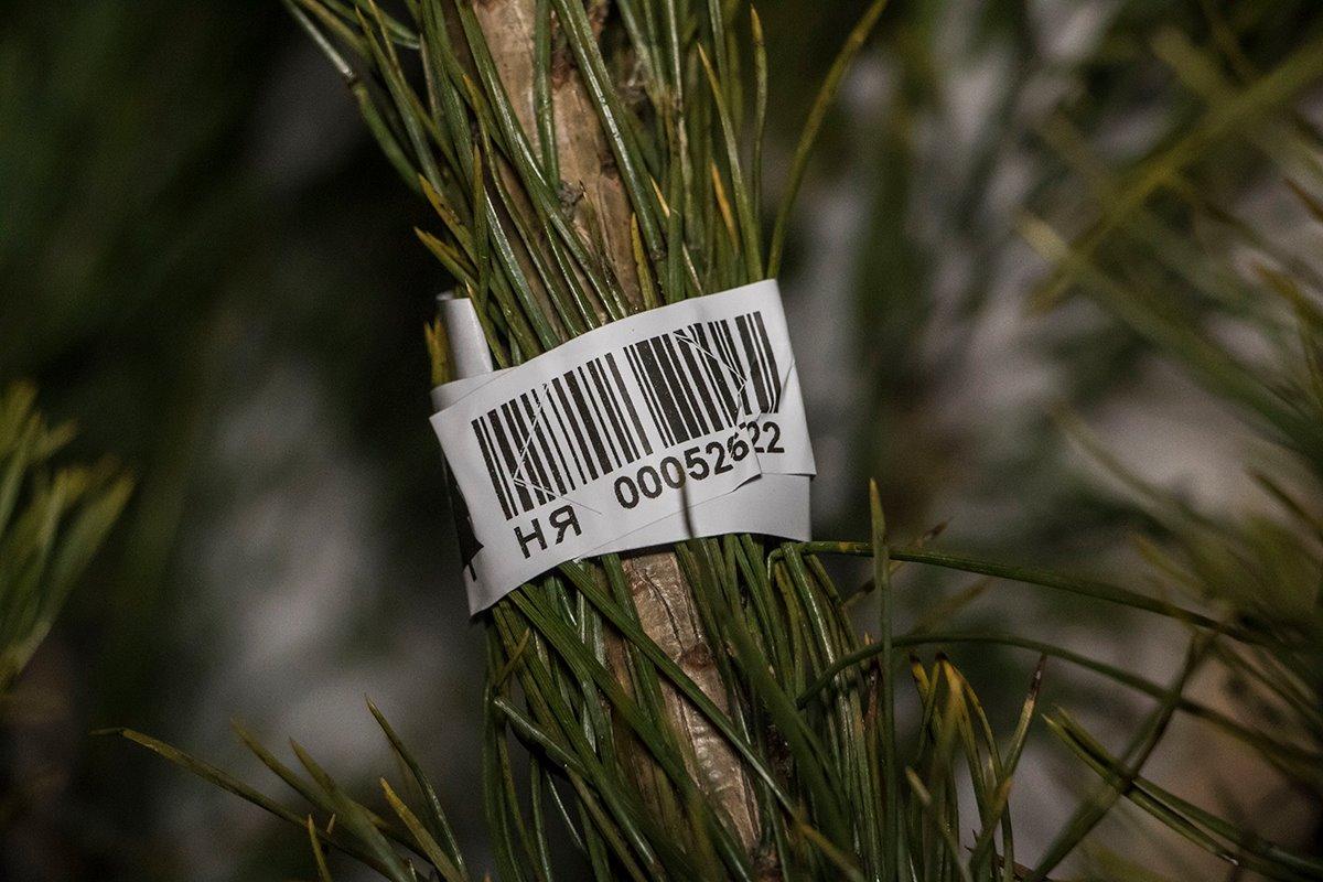 На каждой срубленной елки должен быть свой штрих-код