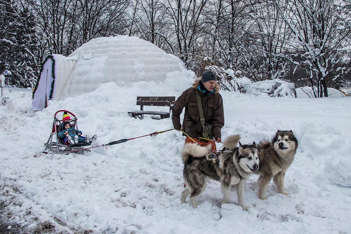 Взрослые собаки катают деток на снежных горках