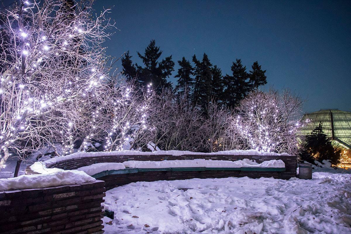 Вечером ботанический сад превращается в новогоднюю сказку