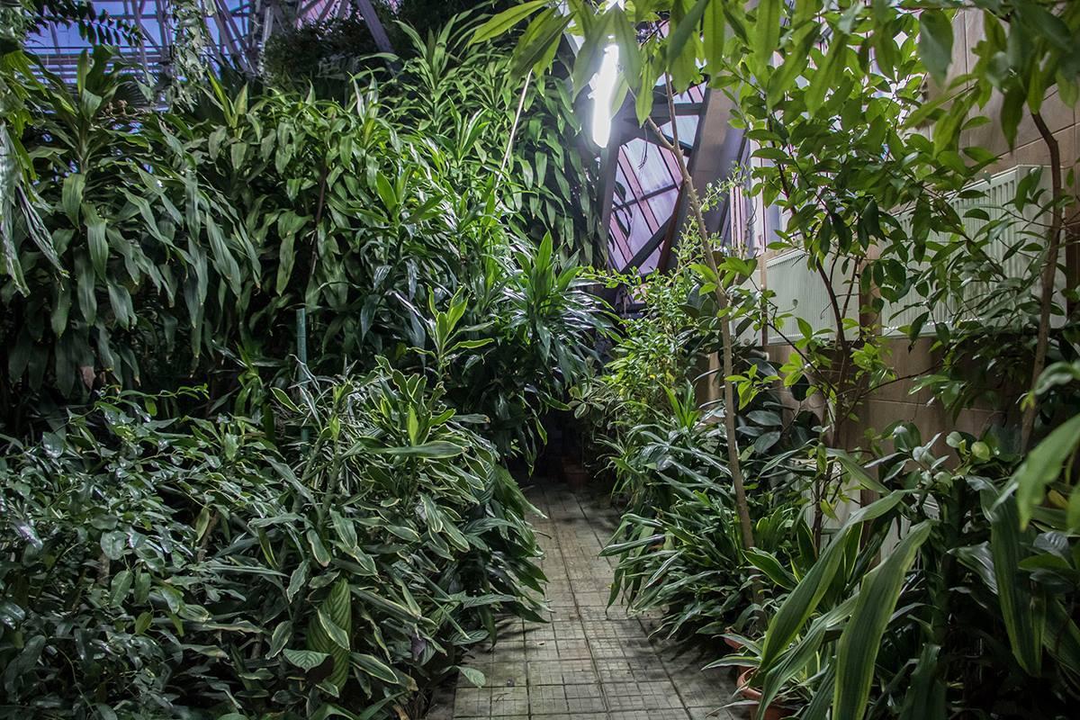 От украинского климата растения прячутся в оранжерее