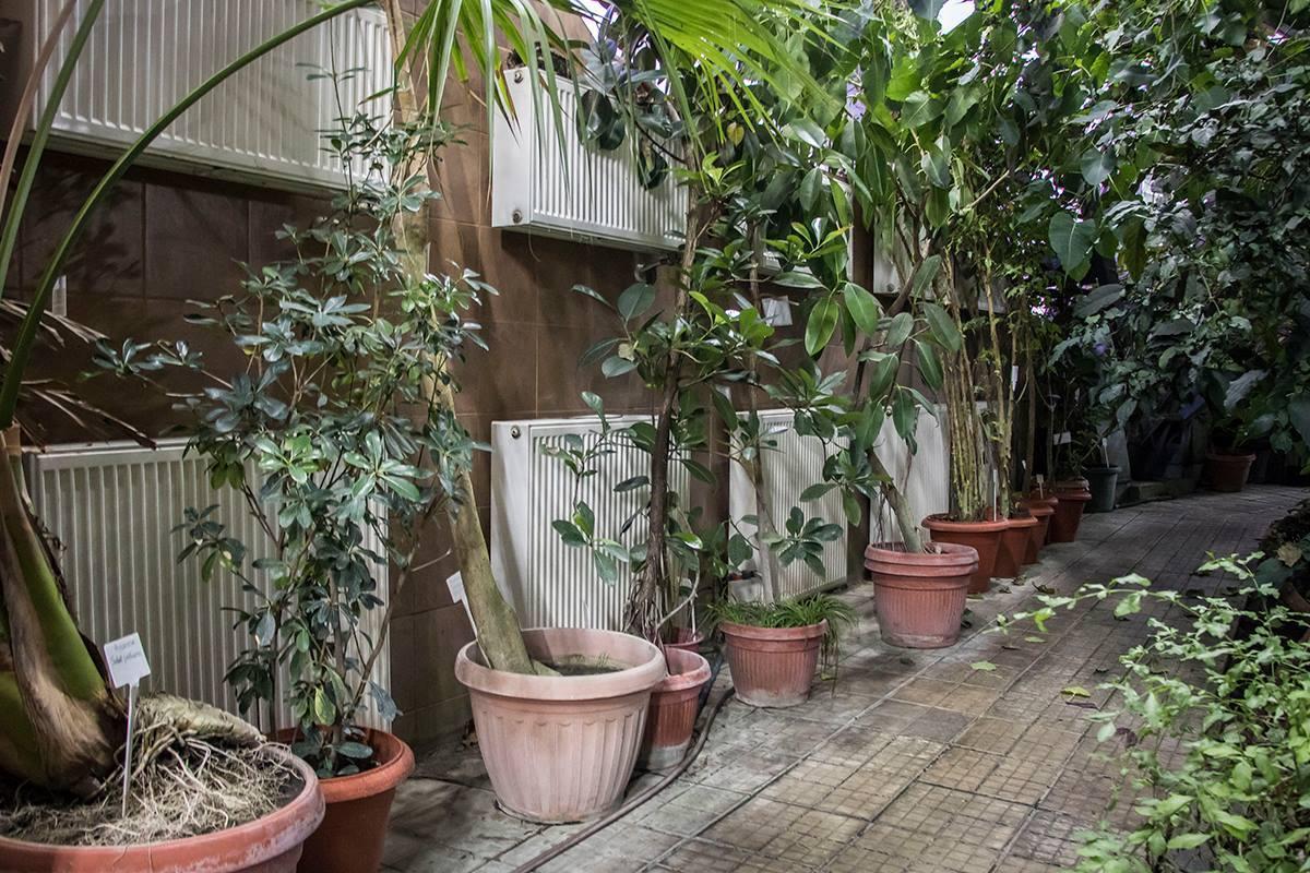 Экзотические растения в Киеве пробудут месяц