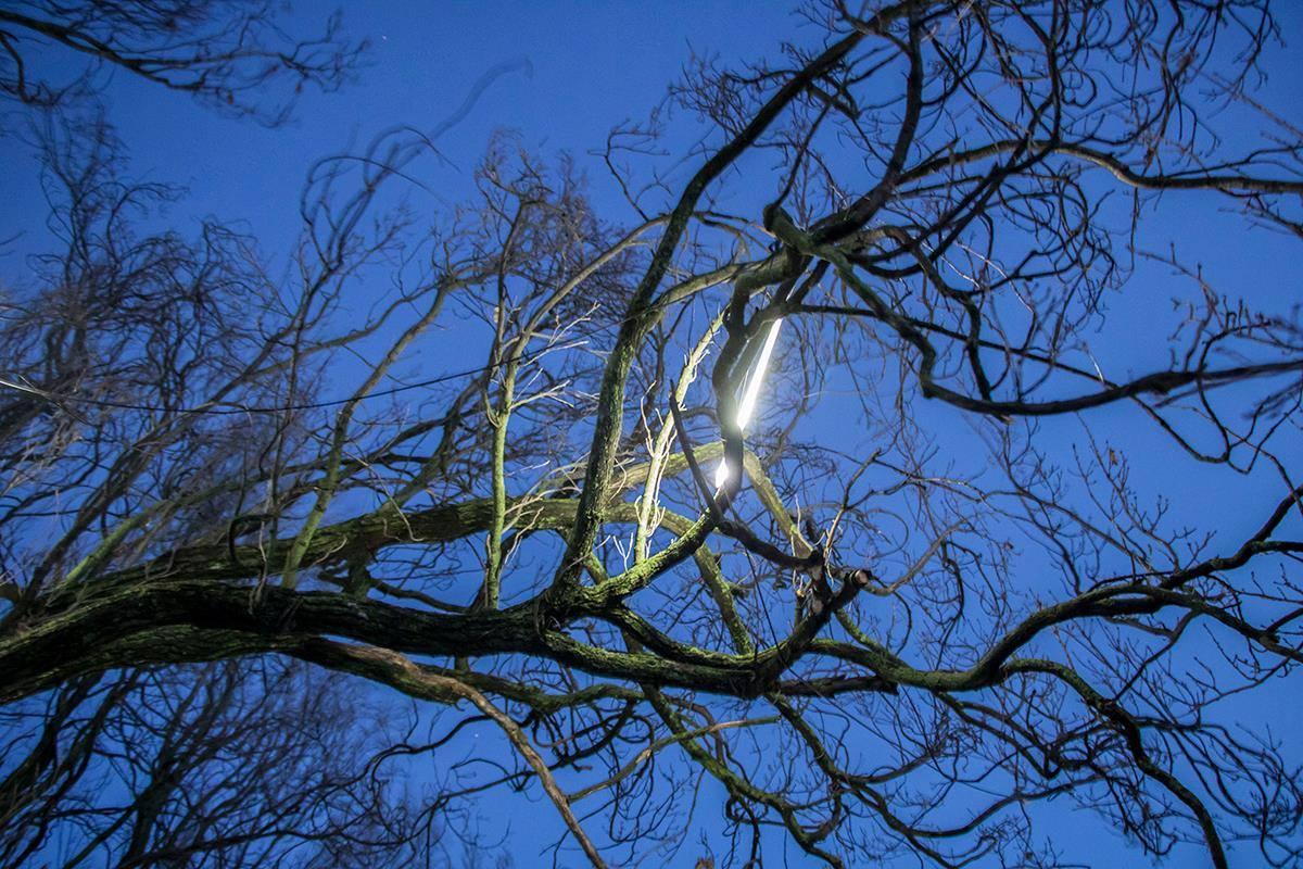 Для фестиваля на деревьях разместили специальные лампы