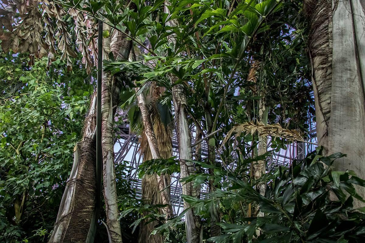 В Киеве открылась выставка тропического леса