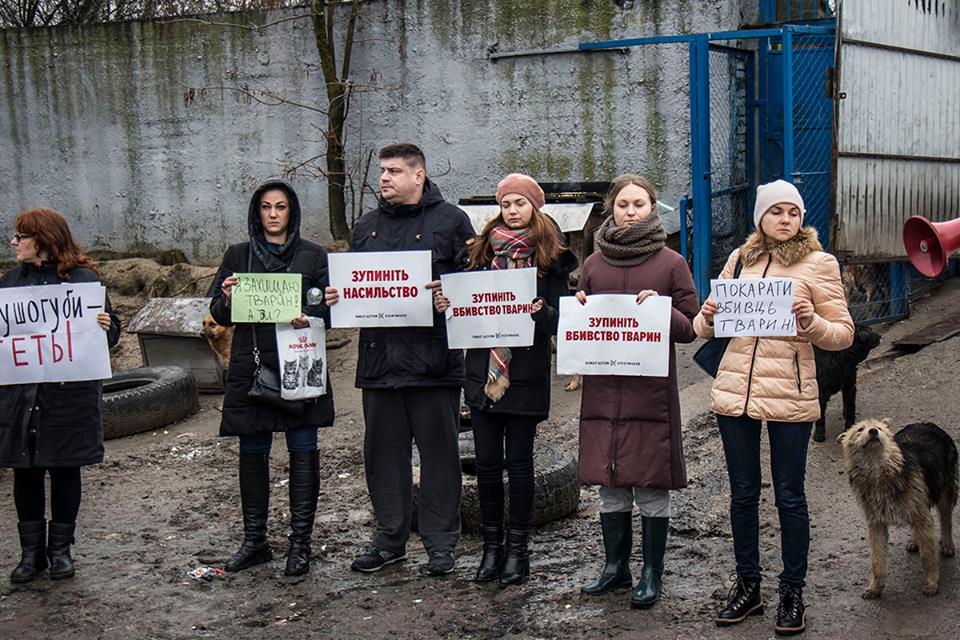 30 декабря на территории приюта провели акцию, чтобы привлечь внимание властей