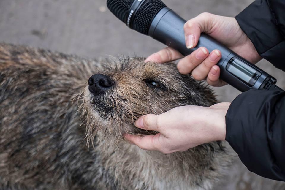 Опекуны бездомных собак не могут ничего сделать. Полиция не принимает никаких мер