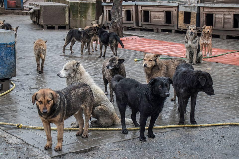 В киевском приюте для животных SOS неизвестные расстреливают собак