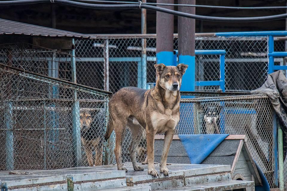 Директора приюта надеются, что мэр Киева поможет уберечь животных от догхантеров