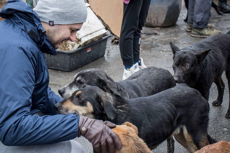 27 декабря на дороге возле приюта нашли застреленную собаку