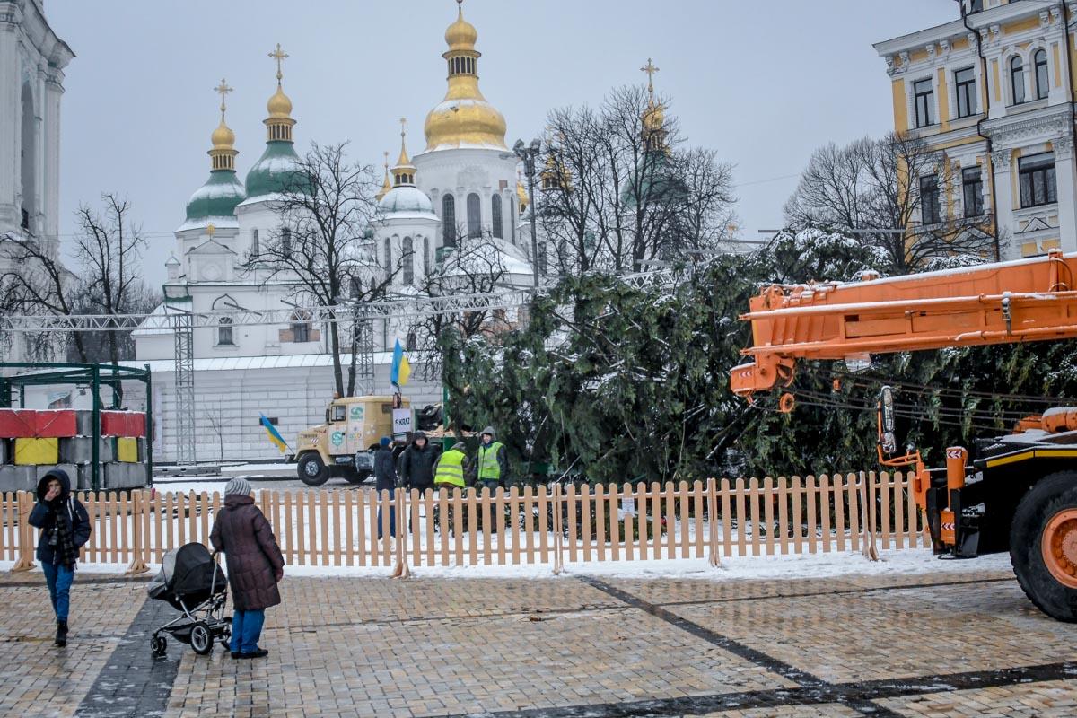 Новогодняя красавица наконец приехала в Киев