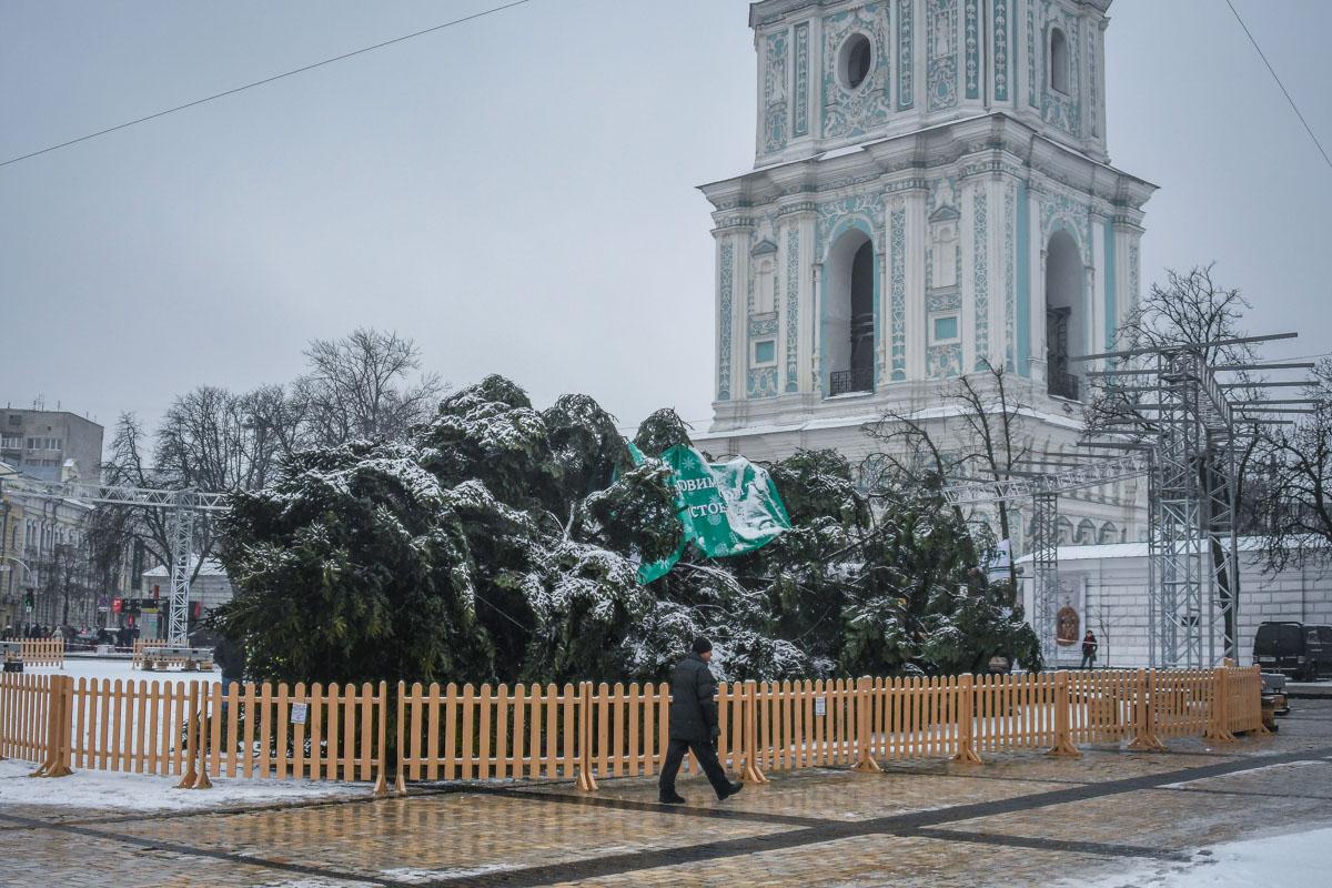 По словам водителя, елку доставили в Киев около 2 часов ночи