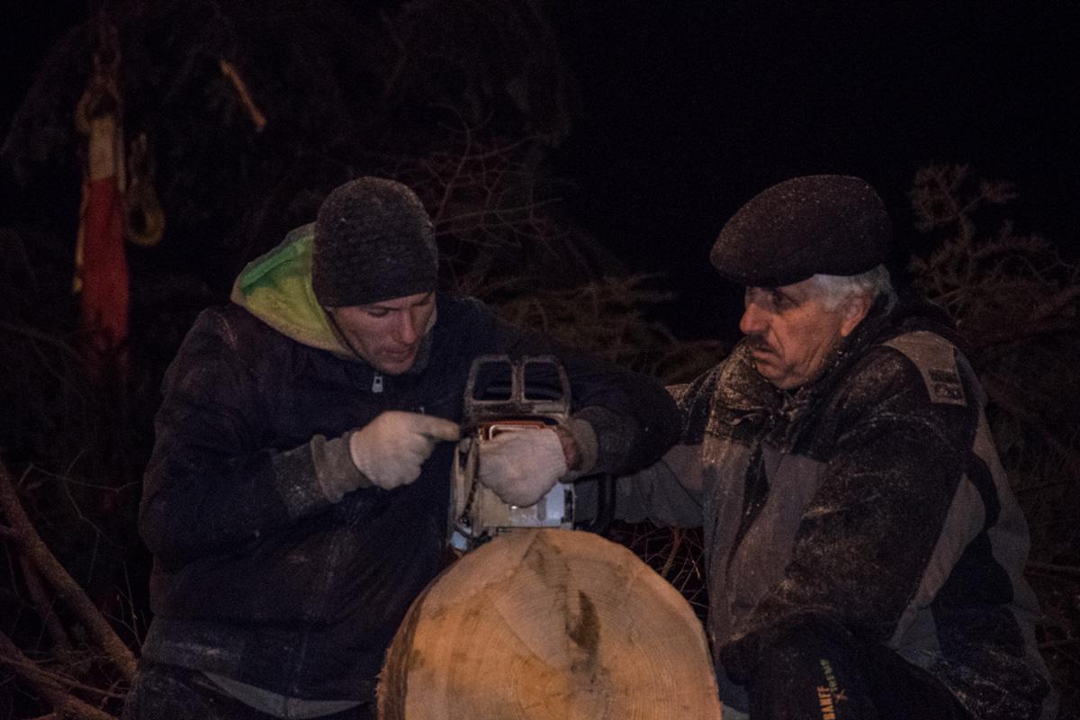 Работники, находясь на холоде, весь день работали над подготовкой елки к установке