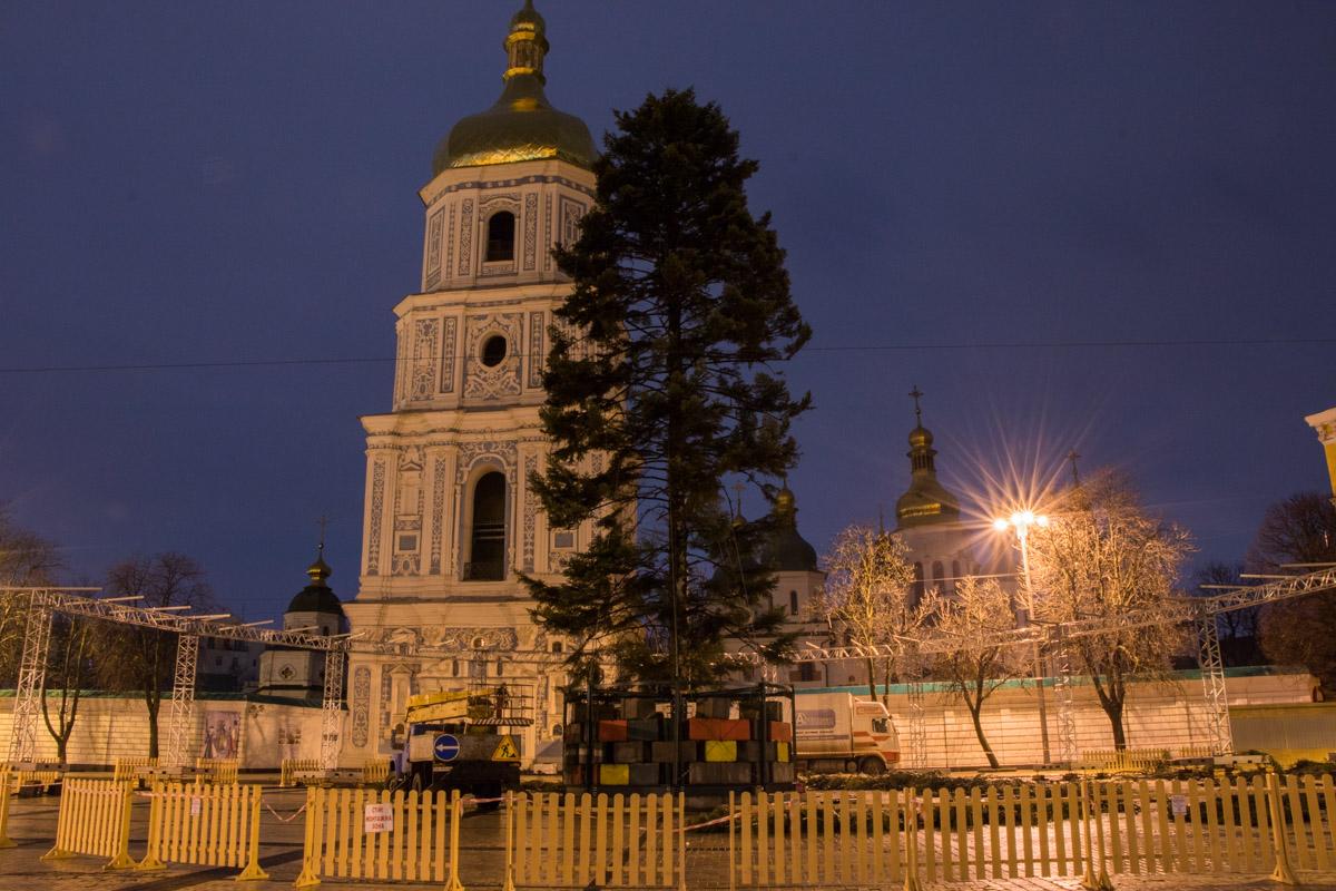 Пока елка не оправдала ожиданий киевлян