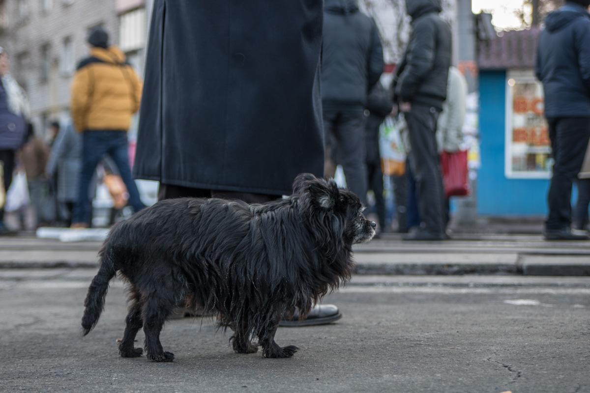 В акции протеста участвовала даже собачка