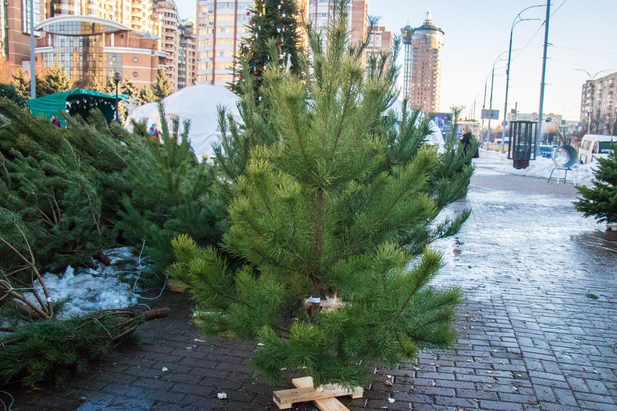 Такая елка обойдется покупателю примерно в 200 гривен