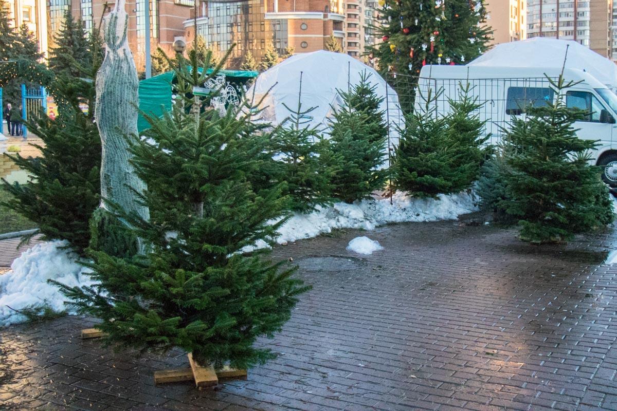 За такую елку придется выложить от 300 гривен
