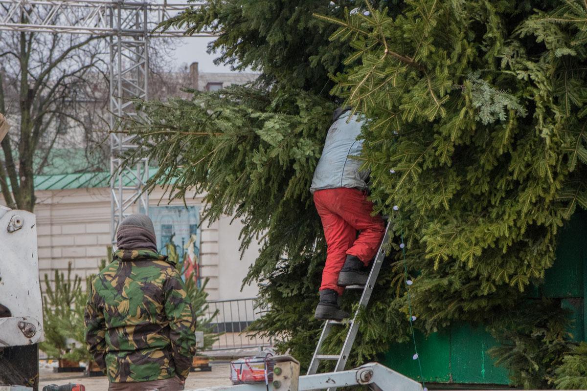 Так устанавливают елку