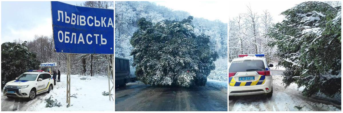 Елку медленно транспортирую из-за больших ее размеров и метели во Львовской области