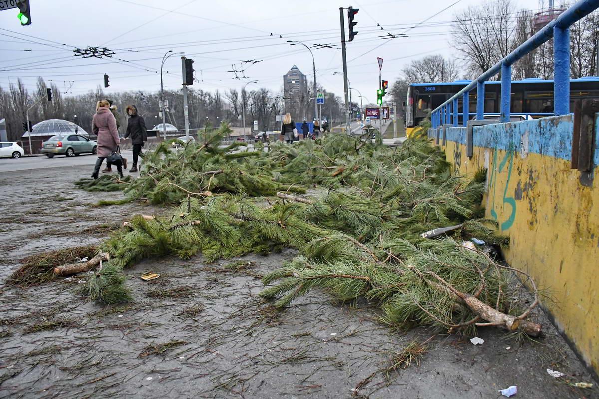 На Дорогожичах деревья валяются на переходе улицы Олены Телиги