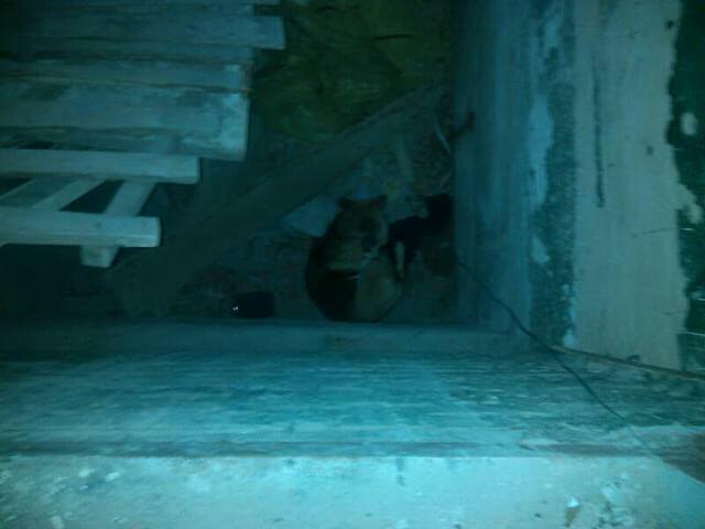 Собаки упали в шахту лифта