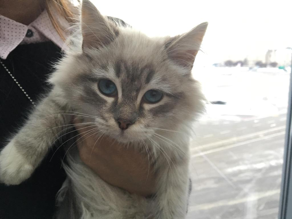 Теперь пушистой котейке будут дарить любовь и тепло внучки Сергея