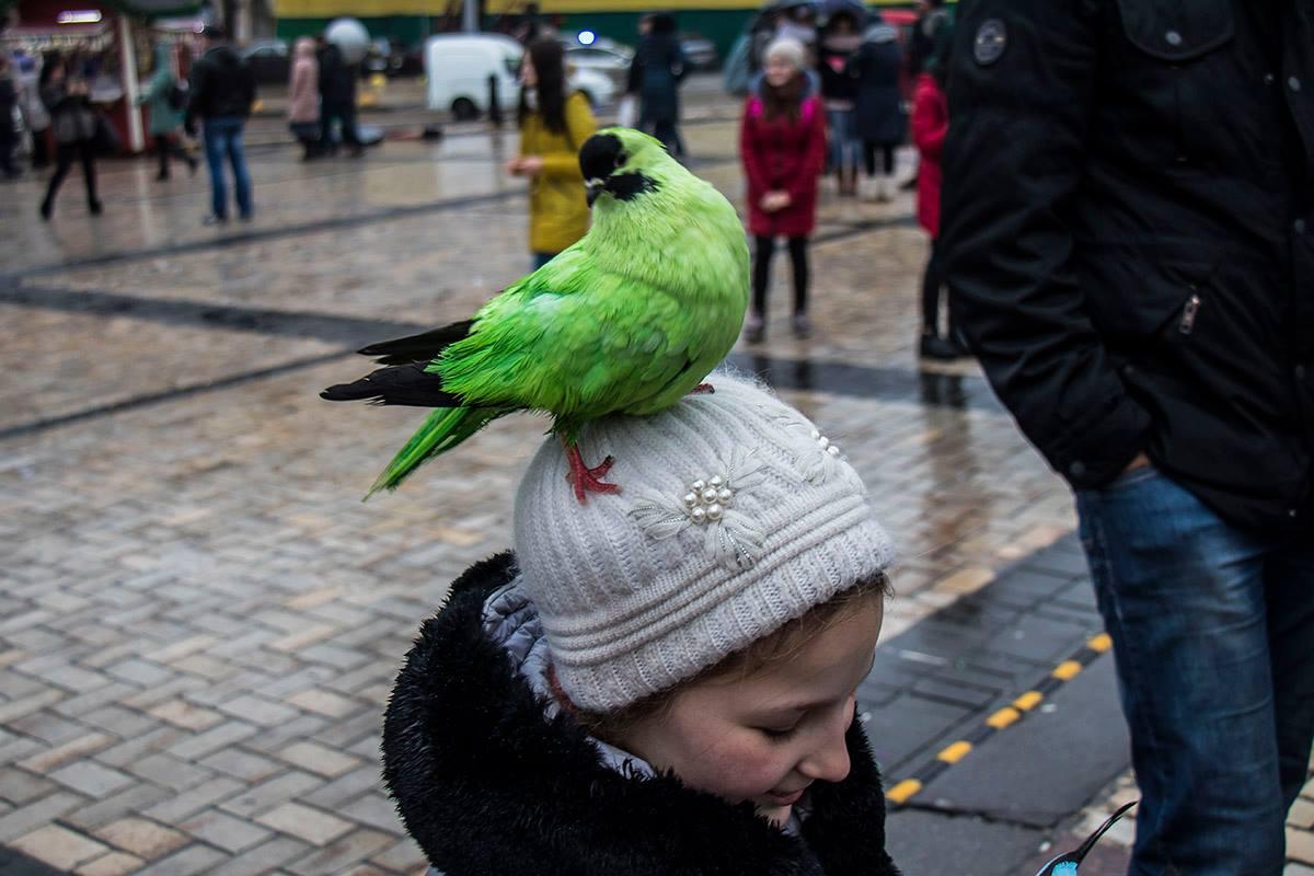 На Софийской площади предлагают сфотографироваться с цветными голубями
