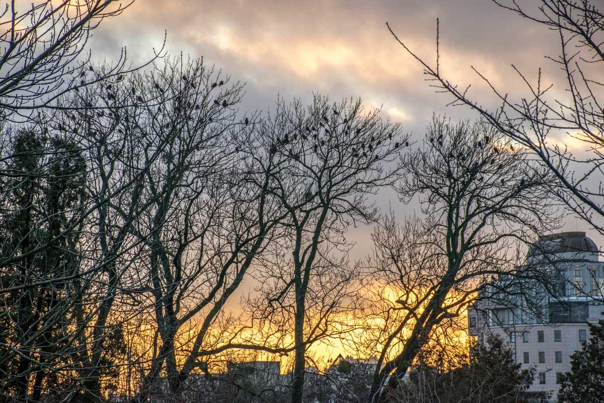 Линия заката прошла вдоль зимнего города