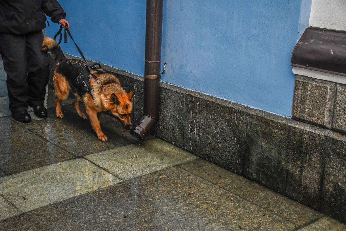 Снаружи собор осмотрели специально обученные собаки