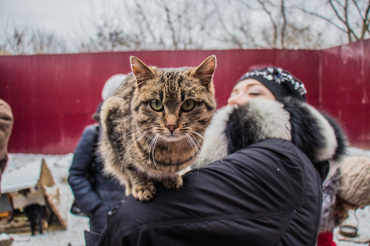 Некоторые коты любят полазить по людям