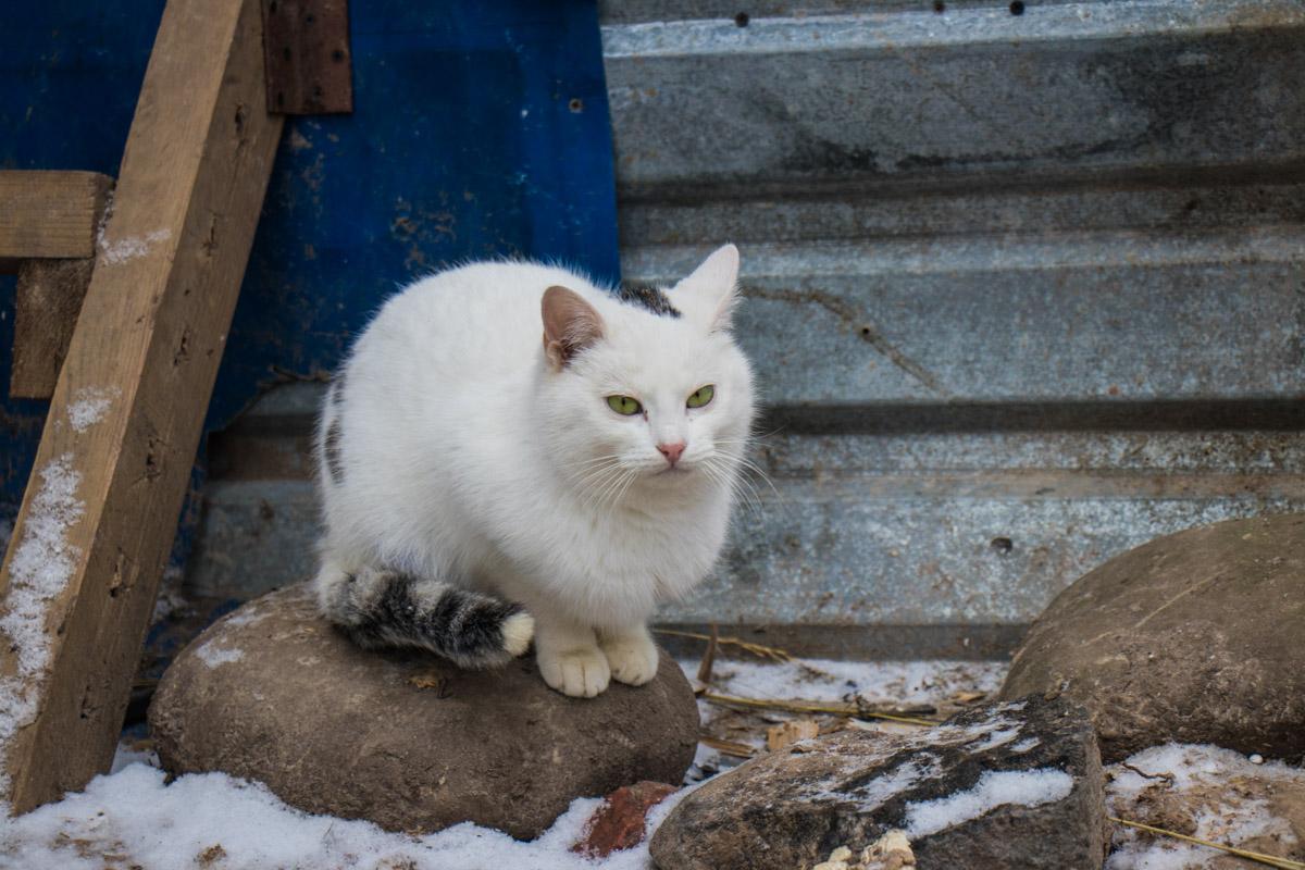 Кошка – крошечный лев, который любит мышей, ненавидит собак и покровительствует человеку