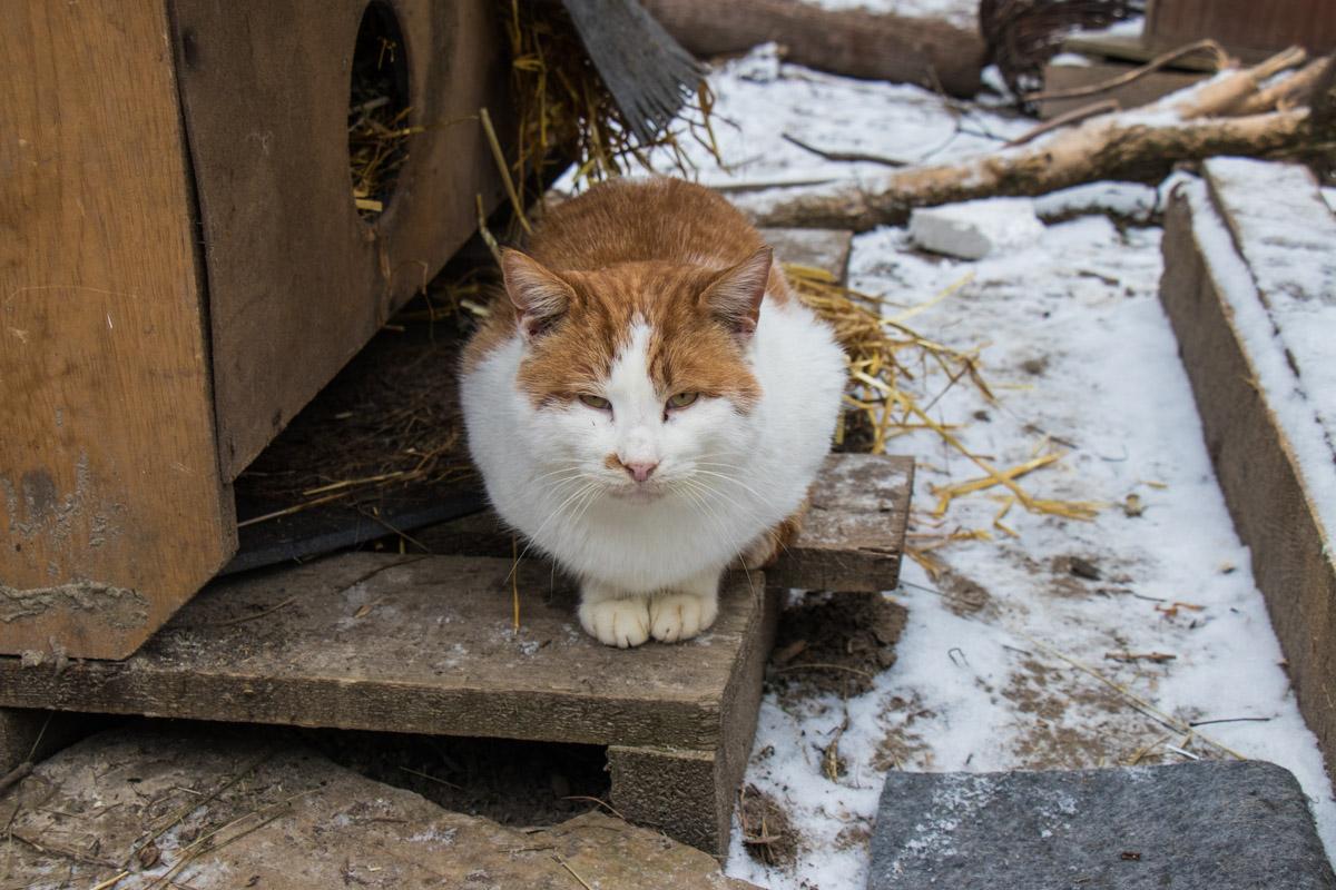 """""""Любить кошку можно только на ее условиях"""""""